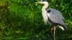 ವನ್ಯಜೀವಿ ಫೋಟೋಗ್ರಫಿ ಗೆ ಮಹಾರಾಷ್ಟ್ರದಲ್ಲಿರುವ ಈ ಪಕ್ಷಿಧಾಮಗಳೇ ಬೆಸ್ಟ್