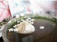 15 ಕೆ.ಜಿ ಭಾರದ ಕಲ್ಲು ನೀರಿನಲ್ಲಿ ತೇಲಾಡುತ್ತದೆ: ರಾಮೇಶ್ವರ