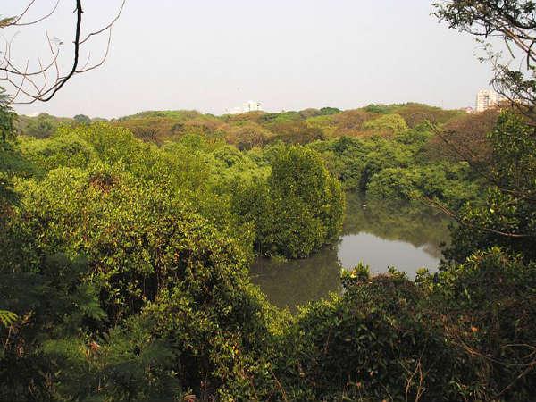 ಮಂಗಳವನಂ : ಕೊಚ್ಚಿ ನಗರದ ಶ್ವಾಸಕೋಶ!