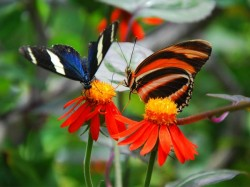Witness The Flying Jewels At These Butterfly Parks Of India