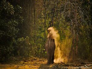ಕಬಿನಿ ಹಿನ್ನೀರಿನ ಶ್ರೀಮಂತ ವನ್ಯಜೀವನ