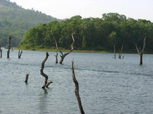 Thekkady Cool Stroll Wild Nature