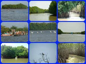 Pichavaram Mangrove Beauty
