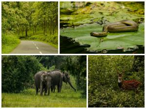 Wayanad Wildlife Sanctuary Rich Flora Fauna