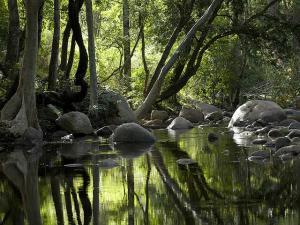 Chinnar Wildlife Sanctuary Kerala