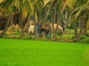 Beautiful Coastal Andhra Tour