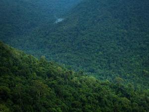 Few Thrilling Forests Karnataka
