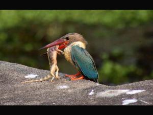 Amazing Thrissur Kole Wetlands