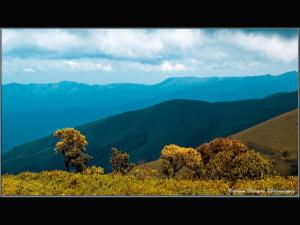Chikmagalur An Amazing Winter Location Karnataka