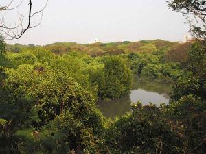 Mangalavanam Bird Sanctuary Green Lung Kochi