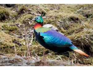 Exotic Animals Found The Indian Himalayas