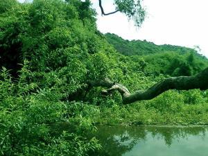 Punyagiri Beautiful Sacred Treasure Nature Eastern Ghats
