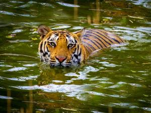 Best Places Tiger Sightings India