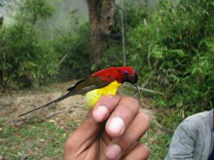 Eaglenest Wildlife Sanctuary Arunachal Pradesh Bird Watchers Paradise