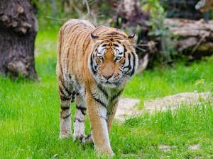Top 7 Wildlife Destinations India