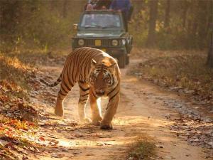 Wildlife India