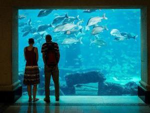Bag A Bahu Aquarium
