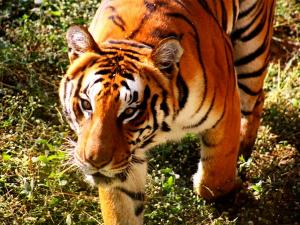 Top 6 Zoos India That You Cannot Miss