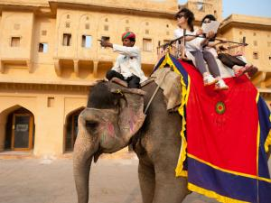 Best Destinations Elephant Safaris India