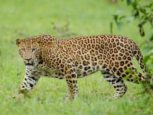 City Safari Visit The Wildlife Nagarhole National Park