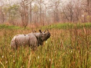 Places India Spot One Horned Rhinos