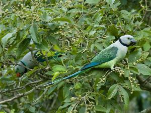 Enlighten Your Minds With The Top Bird Sanctuaries Kerala