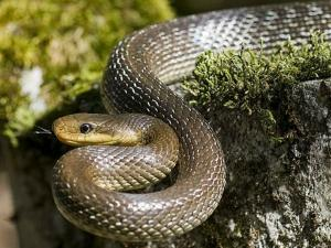 A Village Where People Given Place For Snakes Inside House