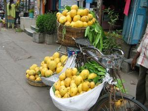 Variety Of Mangoes In India