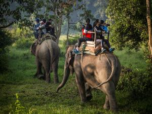 Mudumalai National Park Tamil Nadu Timings Things Do How