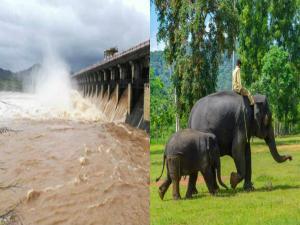 Gajanur Dam Shivamogga Attractions And How To Reach