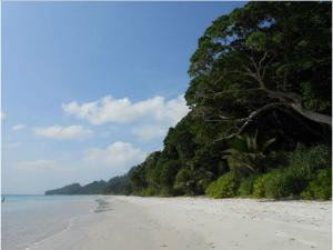 Trekking In Andaman And Nicobar Attractions And How To Reac