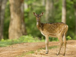 3 Day Road Trip To Nagarhole From Bylakuppe