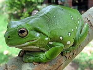 Unique Creatures Western Ghats