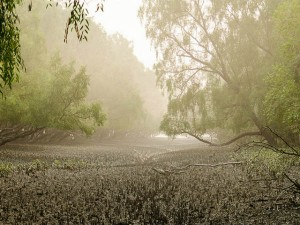 Stunning Forest Tour Sundarban