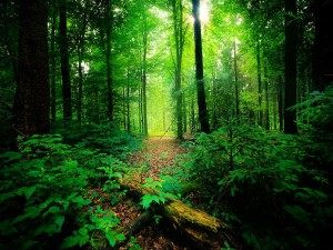 Few Thrilling Forests Kerala