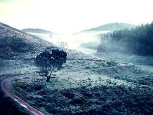 Trek Through Escape Road Kodai Munnar