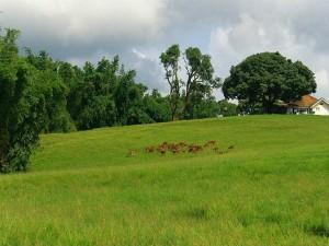 Anaimalai Hills The Beautiful Mountain Range Western Ghats