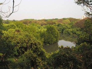 Mangalavanam Bird Sanctuary Green Lung Kochi