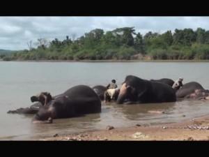 Sakrebailu Wonderful Elephant Camp Karnataka