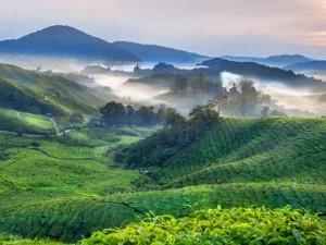 Plantation Industry Karnataka