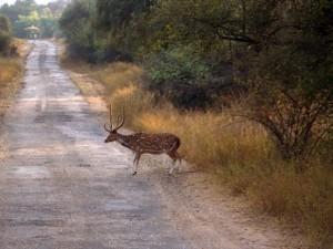 Best Wildlife Sanctuaries National Parks Karnataka