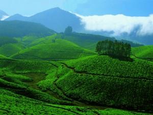 Places Enjoy Monsoon Kerala