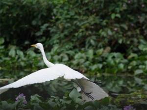 Visit These 8 Beautiful Places At Kottayam The Land Lakes