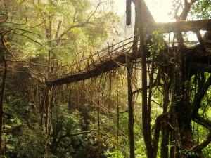 Must See Places Meghalaya