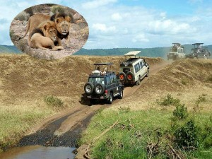 Etawah Wildlife Safari Park In Uttar Pradesh