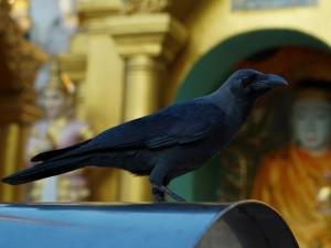 Suyambu Saneeswara Bhagavan Temple Tamilnadu History Timings And How To Reach