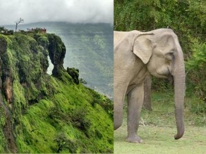 Elephant S Head Point Mahabaleshwar Attractions How Reach