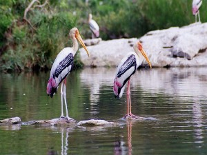 Hesaraghatta Lake Bangalore Attractions How Reach