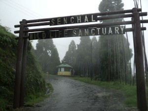 Senchal Wildlife Sanctuary Attractions And How To Reach