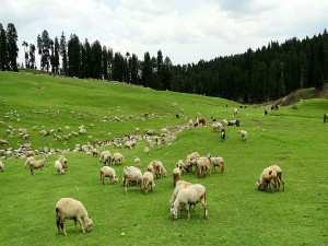 Budgam In Kashmir Attractions And How To Reach